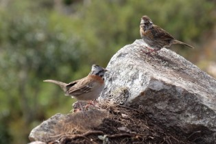 birds at the top